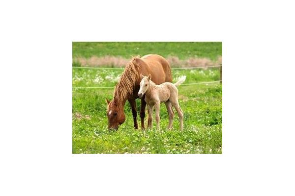 Curly Horse and her Baby.
