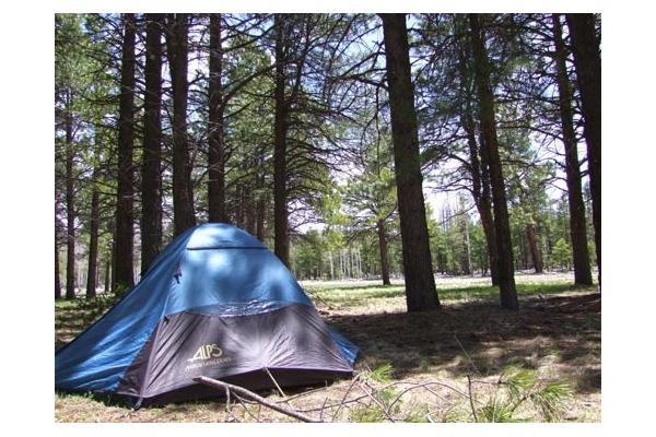 Tent sites in the cool pines of the Flagstaff Nordic Center